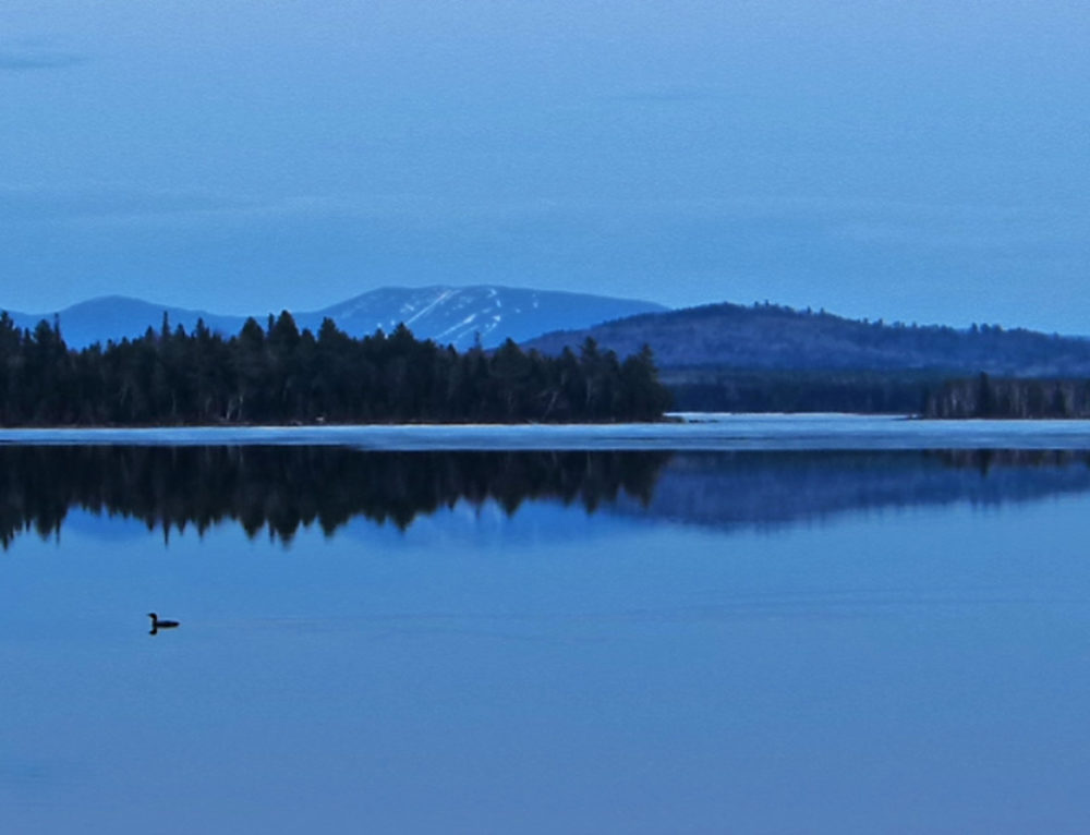 Loon (and a moon)