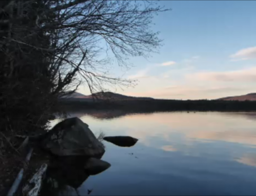 Lake view (video)